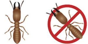 Solución garantizada-DMR Control de Plagas
