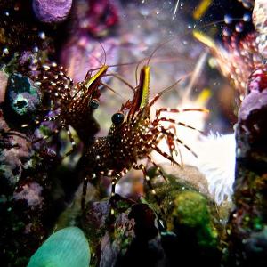 Hermosos paisajes-Naylamp Diving